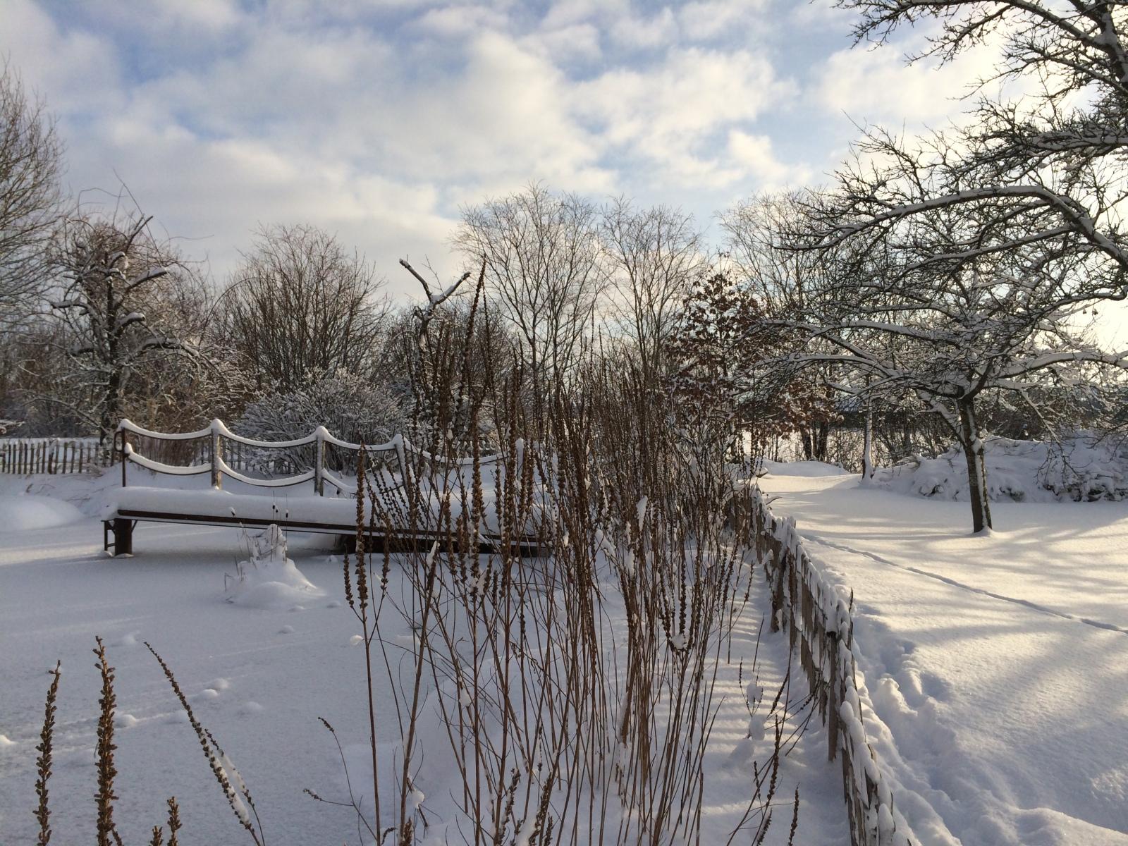 Weihre im Winter